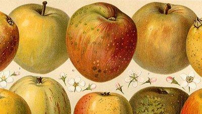Apfel online datiert